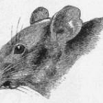 翻訳小説:悪魔の鼠 (E・P・ミッチェル)