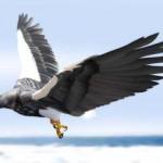 飛ぶために進化した鳥達(後編):オオワシ、アホウドリ、ハチドリ・・・環境に応じて進化した鳥