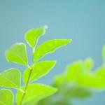 植物の光合成と人工光合成は何が違うのか?人に有用なエネルギーを作る力